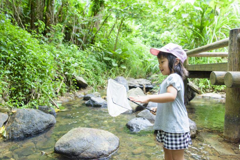 水と緑の自然教室 4