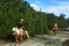 森と浜散歩(馬体験)