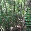 手つかずの自然がここにある!ニブチの森散策 5