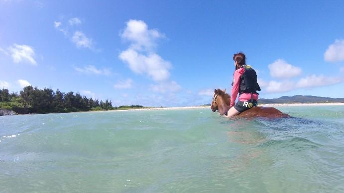 「海馬遊び」 5