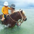 「海馬遊び」 6