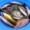【体験】島野菜を使った沖縄料理体験 5