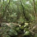 ニブチの森散策