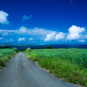 ウージ畑と海